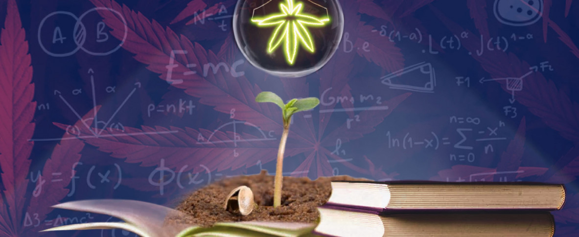 Пять самых популярных статей о семенах марихуаны