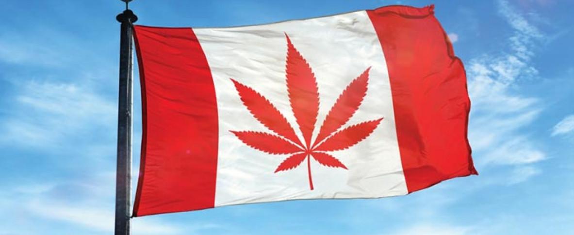 Canada семена конопляные