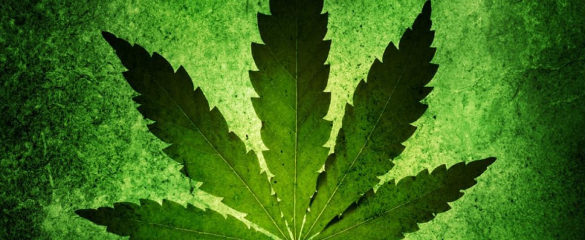 Фотки конопли и марихуаны казахская конопля