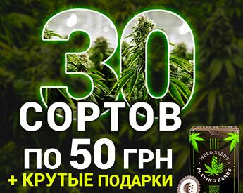 Куплю семена конопли по дешевке марихуану в интернете